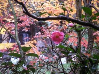 2008年11月29日京都 021.jpg