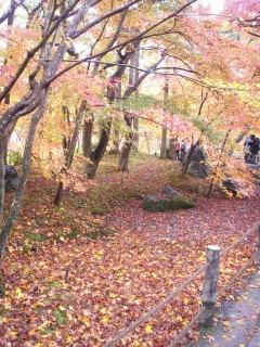 2008年11月29日京都 023.jpg