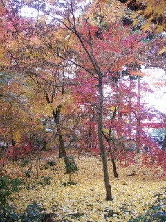 2008年11月29日京都 028.jpg