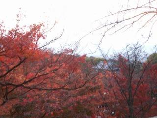 2008年11月29日京都 032.jpg
