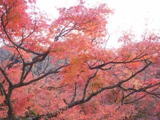 2008年11月29日京都 033.jpg