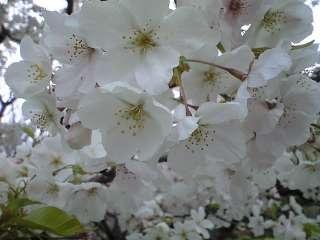 2009年4月4日 004.jpg