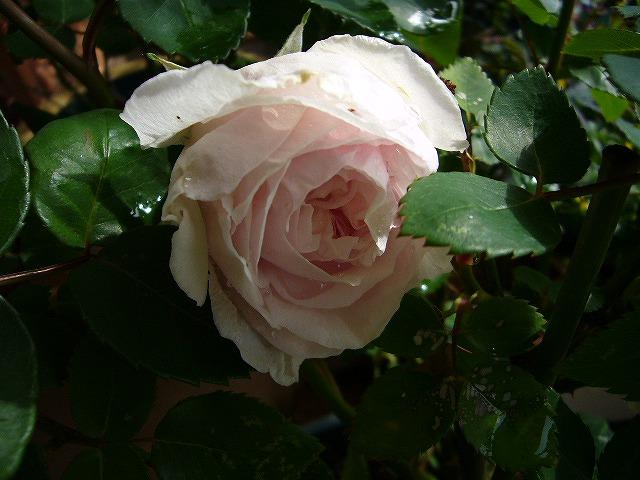201105 006.jpg