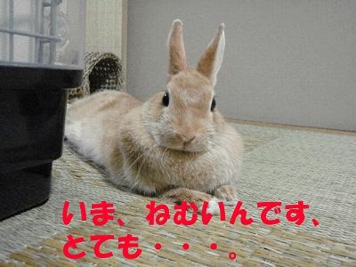 P9031027.jpg