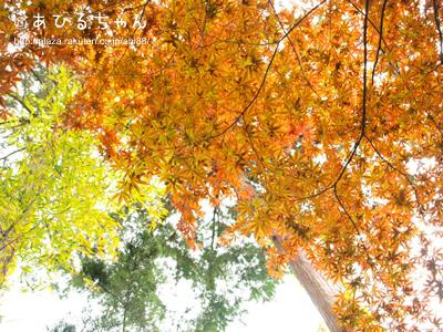 20110513_04.jpg