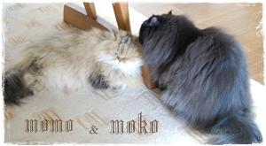 momo&moko