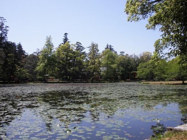 宇佐神宮 菱形池