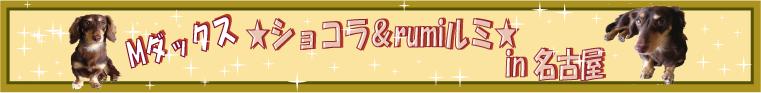 Mダックス★ショコラ&rumiルミ★ブログin名古屋