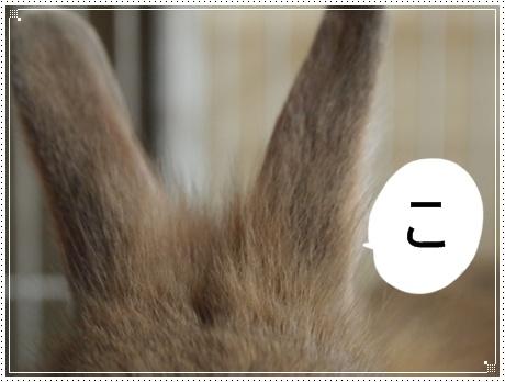 こ 耳.JPG