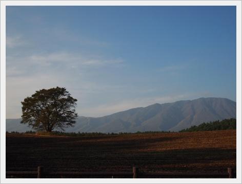 一本桜と岩手山.JPG