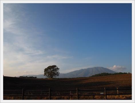 一本桜と岩手山2.JPG
