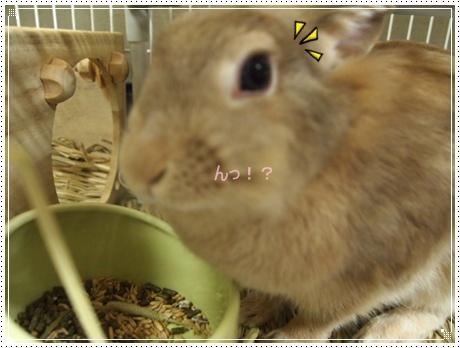 2011_0916画像0019.JPG