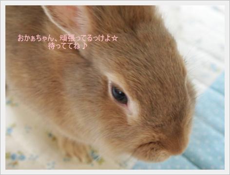 2011_0827画像0034.JPG