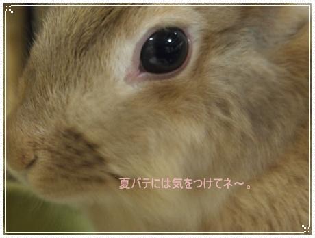 2011_0916画像0026.JPG