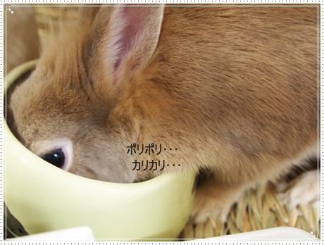 2011_0916画像0030.JPG