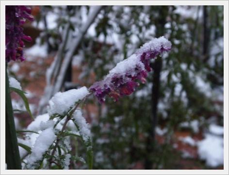 雪 4.JPG