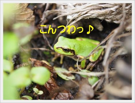 2011_0919画像0009.JPG