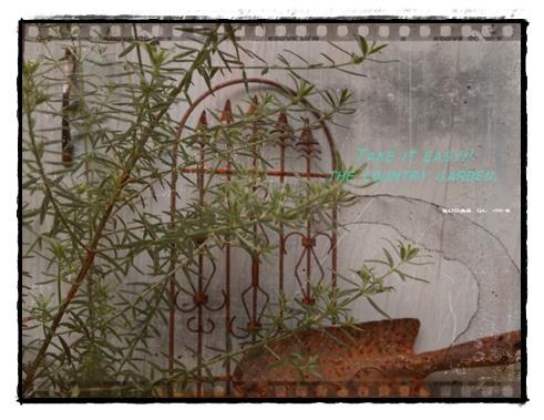 2011_0827画像0042.JPG