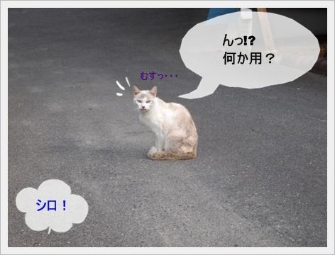 2011_0827画像0045.JPG