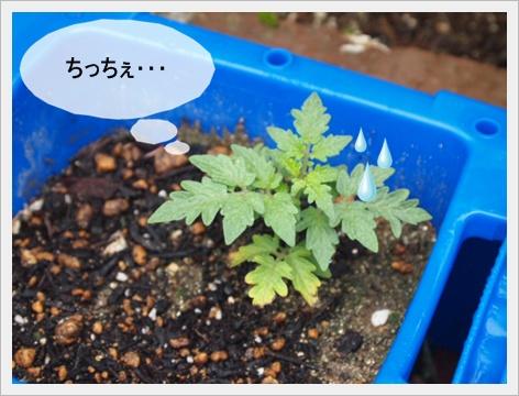 2011_0729画像0290.JPG
