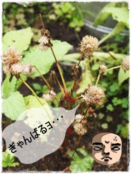 2011_0729画像0326.JPG