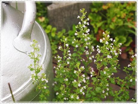 2011_0729画像0331.JPG