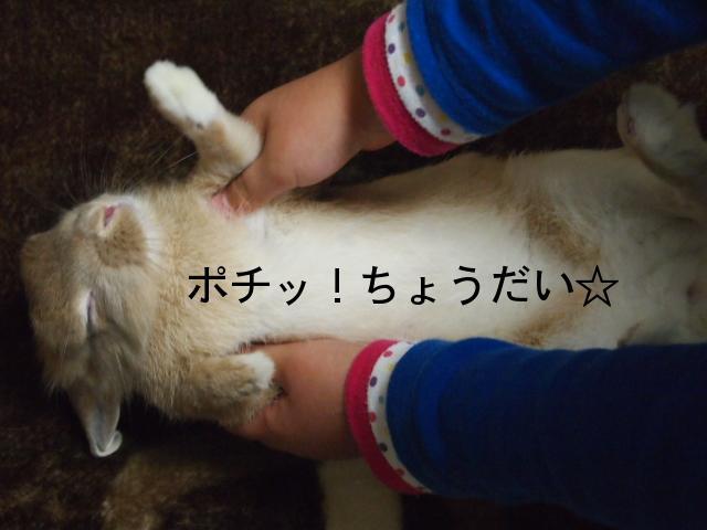 2010_1223画像0173.JPG