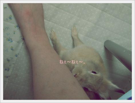2011_0902画像0116.JPG