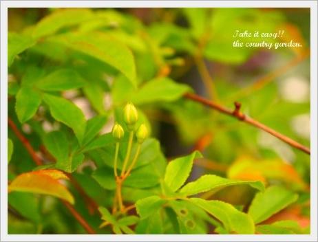 2011_0522画像0042.JPG