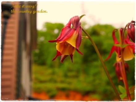 2011_0522画像0045.JPG