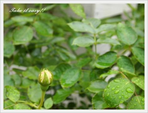 2011_0802画像0299.JPG
