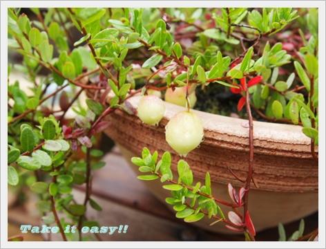 2011_0802画像0308.JPG