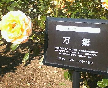 和名がつけられたバラの大輪
