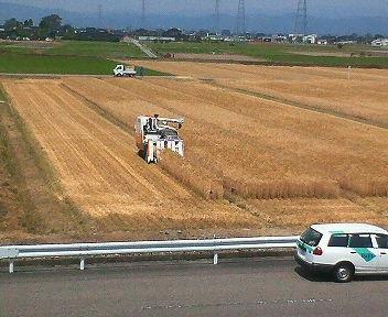 大麦の収穫風景NO1