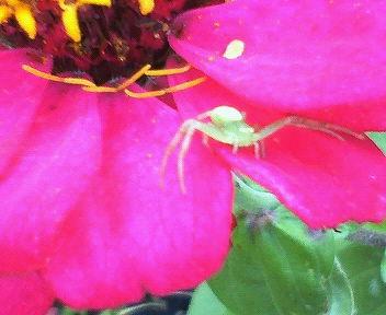 レンズに気づき、前足を大きく広げて威嚇しているクモ