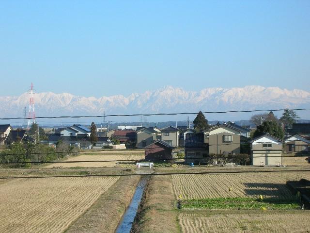 1月30日異常なくらいに暖かいです。これはすでに春です。