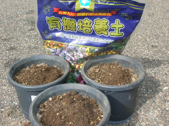 かれた茎を取り除き、新しい土を少し補充します。