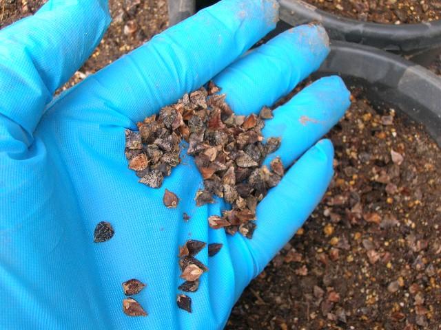 土を湿らせたら、パラパラっと蒔くだけ。
