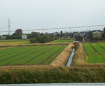 麦が植えられました