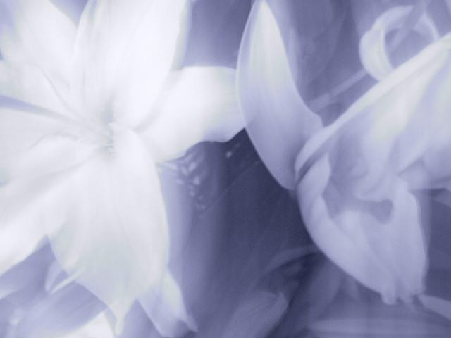 茨木のり子追悼 『 知命 』 『 落ちこぼれ 』 (語り41)