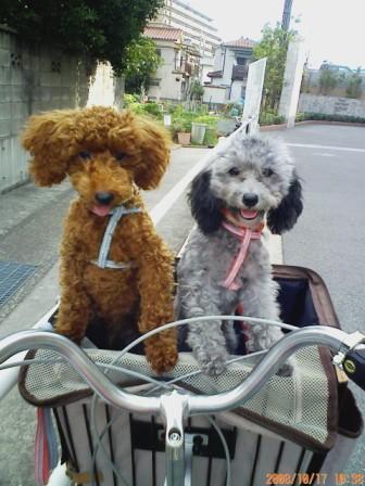 自転車キャリー