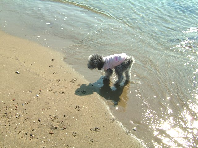 砂浜81114 045