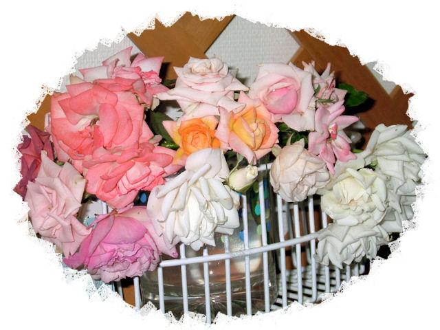 ミニバラ2番花