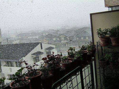 雪60313_016.jpg