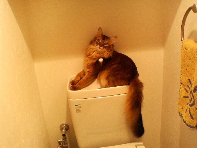 トイレのタンクの上でした