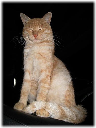 息子と言う名の猫