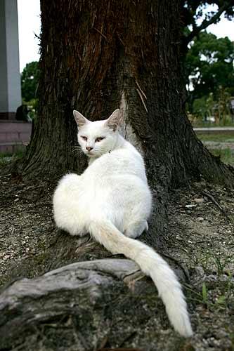 猫@吉香公園