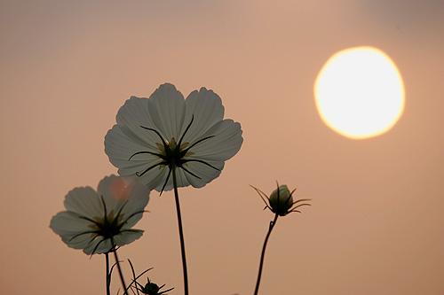 cosmos-sunset