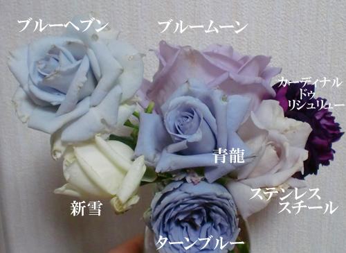 青い バラ 花 言葉 青い花の花言葉24選!幸福から怖いメッセージまで揃っているよ