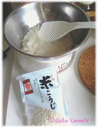 こうじ菌.JPG